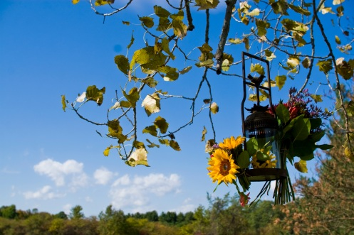 Sunflower lantern, bright blue sky